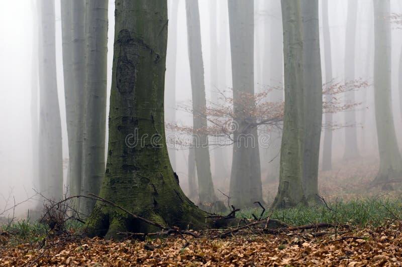 Nevelig bos stock afbeeldingen