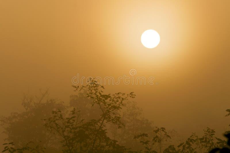 Nevelig bos aan de toenemende dag. stock fotografie