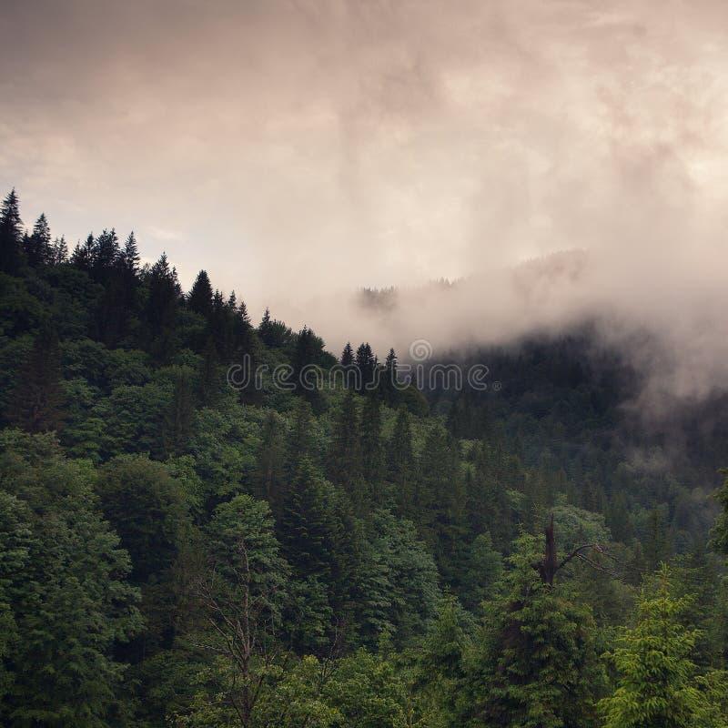 Nevelig bos in de de Herfstbergen royalty-vrije stock foto's