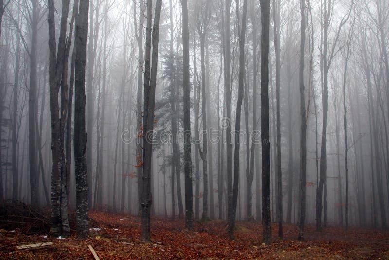 Nevelig bos in de herfst stock foto's