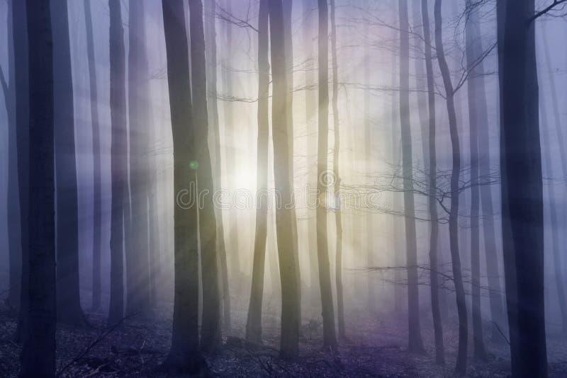 Nevelig bos met zonstralen stock fotografie