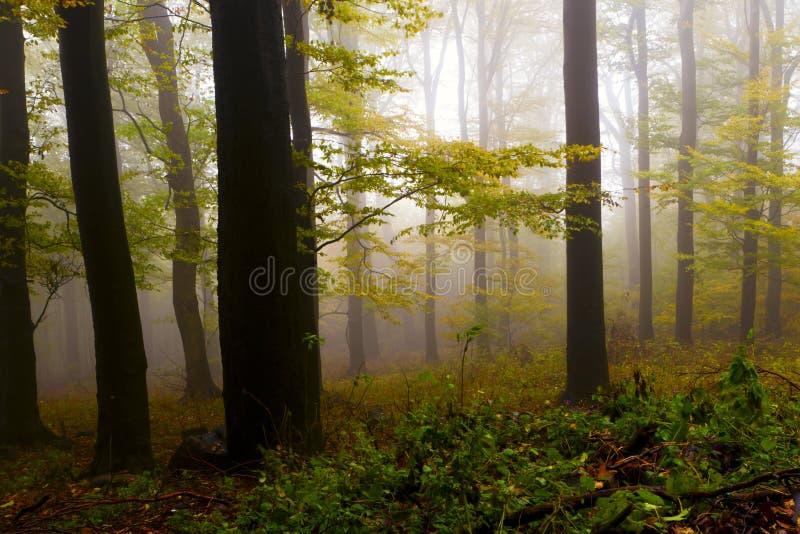 Nevelig de herfstbos, de bergen. royalty-vrije stock fotografie