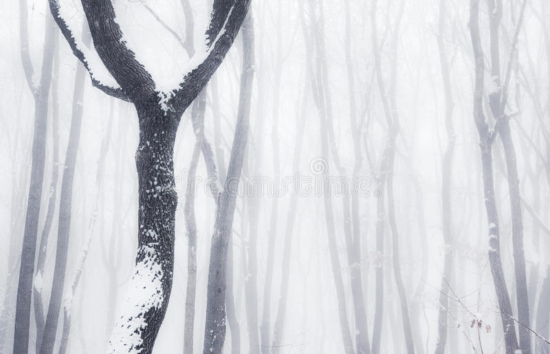 Nevelig de winterhout stock afbeelding