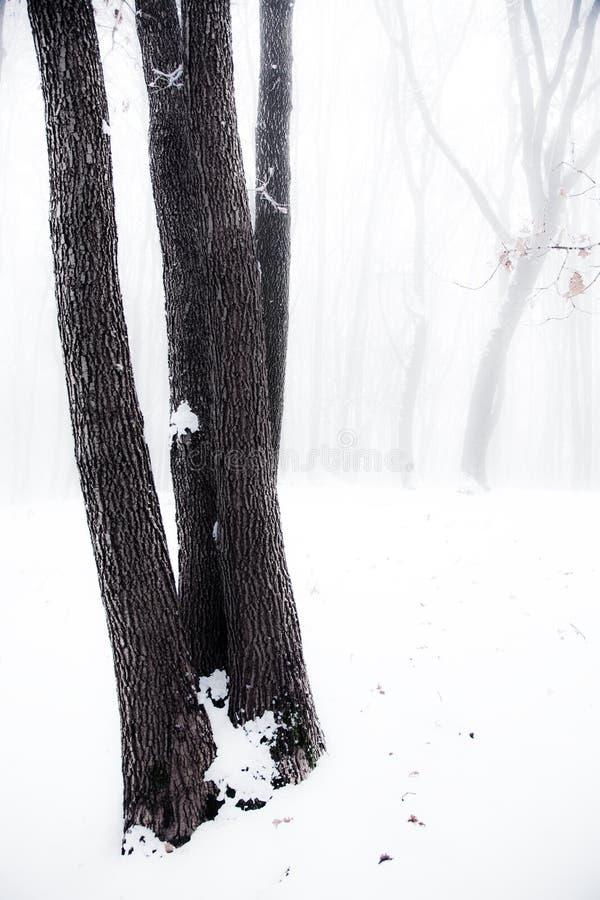 Nevelig de winterhout royalty-vrije stock foto