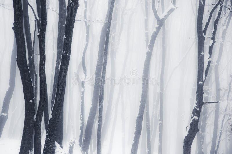 Nevelig de winterhout royalty-vrije stock afbeeldingen