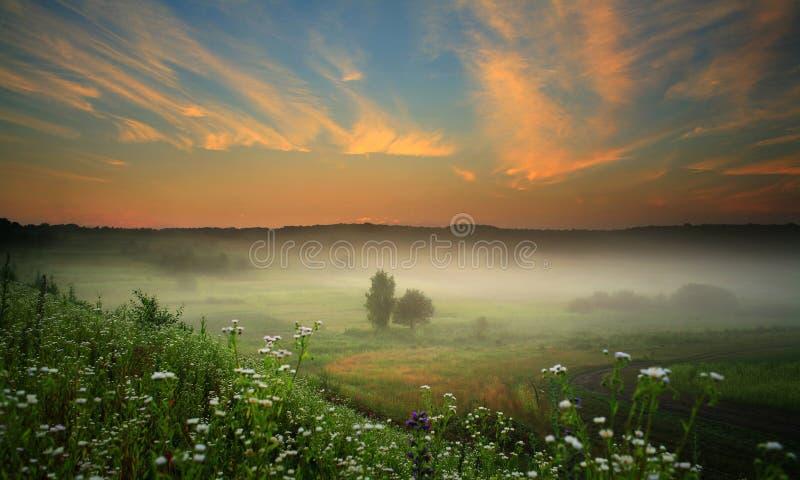 Nevelig landschap stock foto