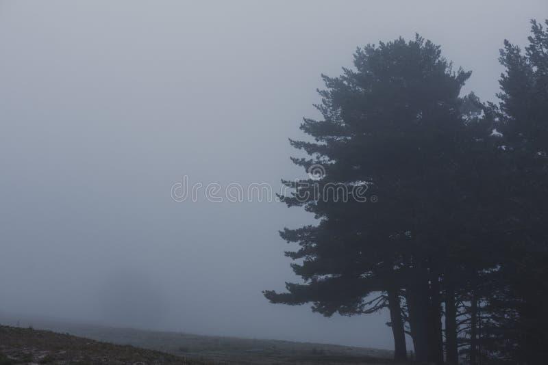 Nevelig mistlandschap in een bos de winter of de herfstconcept royalty-vrije stock foto