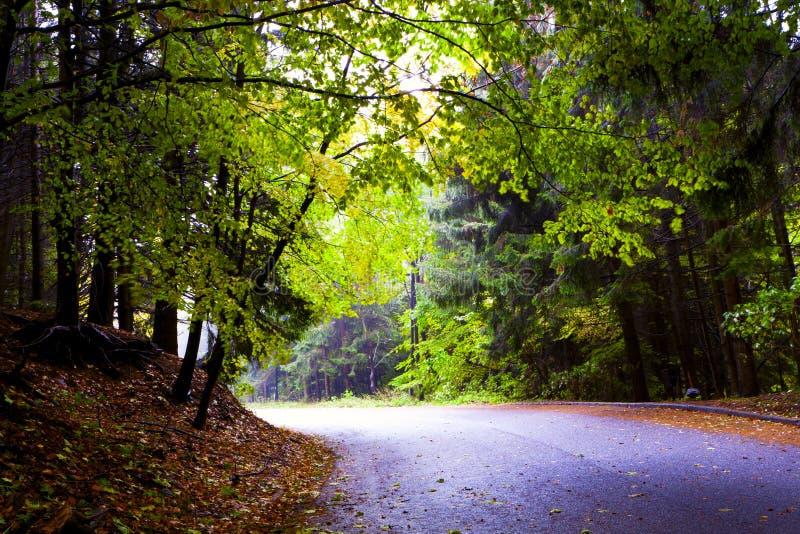 Nevelig mooi de herfstbos, de bergen. stock foto's