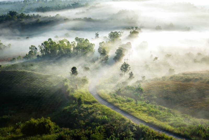 Nevelig ochtendzonlicht en weg stock foto's