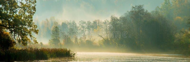 Nevelig panorama van bos en rivier stock foto's