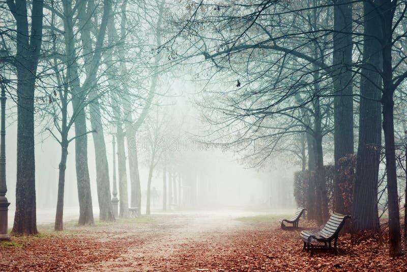 Nevelig park in de herfst stock afbeeldingen