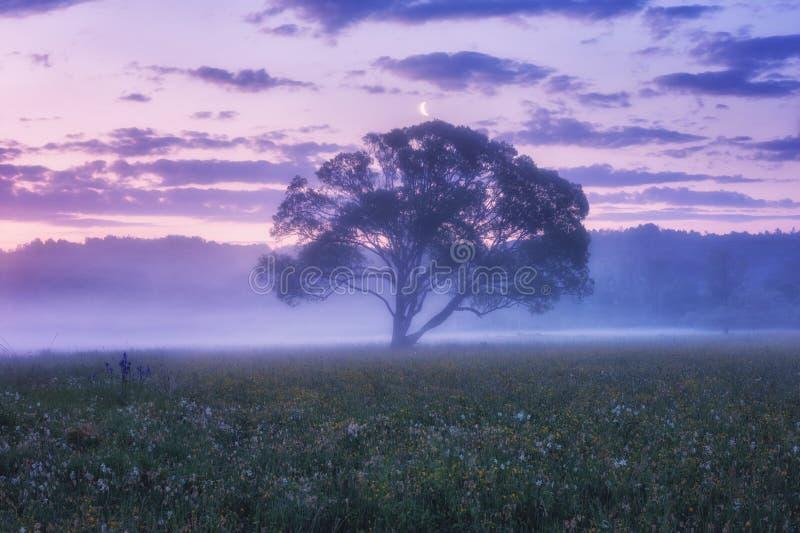 Nevelige bloeiende vallei bij dageraad, toneellandschap met wilde het groeien bloemen, enige boom en kleuren bewolkte hemel stock fotografie