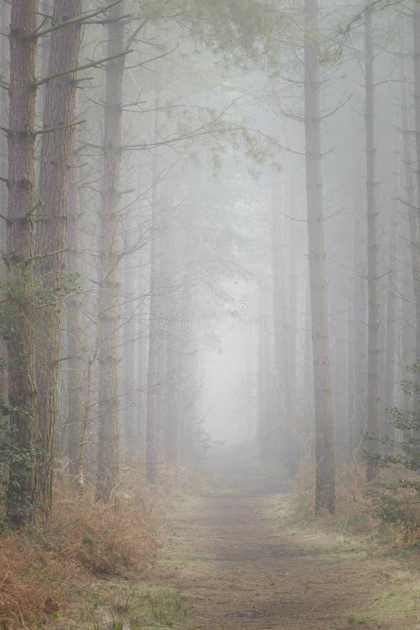 Nevelige bosweg stock foto