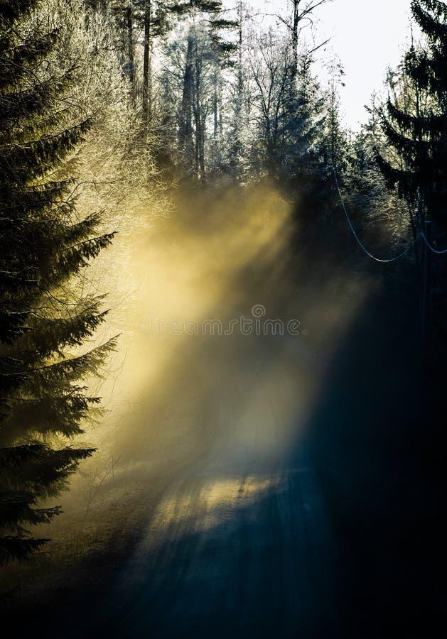 Nevelige bosweg in Finland stock foto's