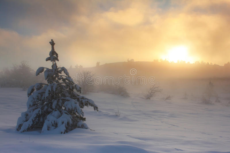 Nevelige dageraad in de bergen stock afbeelding