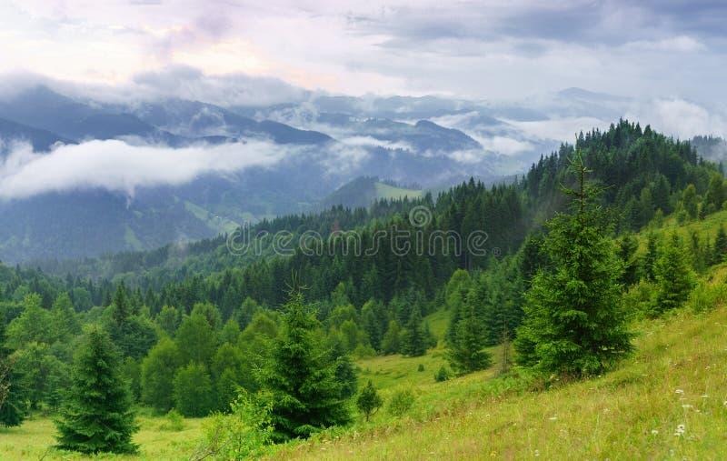 Nevelige de zomer beboste bergen landskape met naaldbomen royalty-vrije stock foto