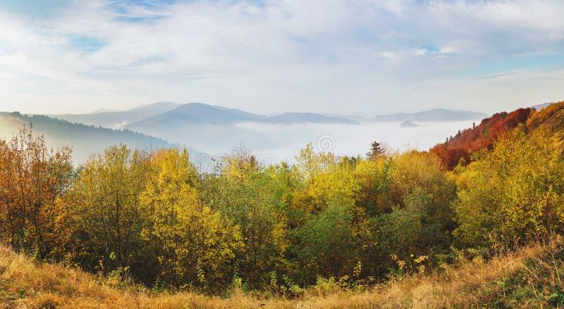 Nevelige die de herfstochtend op heuvelsbergen door beukbos worden behandeld stock fotografie