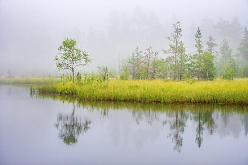Nevelige ochtend bij een moerasmeer met waterbezinningen royalty-vrije stock afbeeldingen