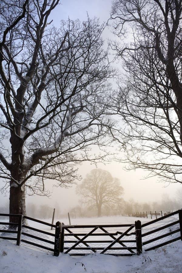 Nevelige Ochtend - de Winter - Engeland royalty-vrije stock afbeeldingen