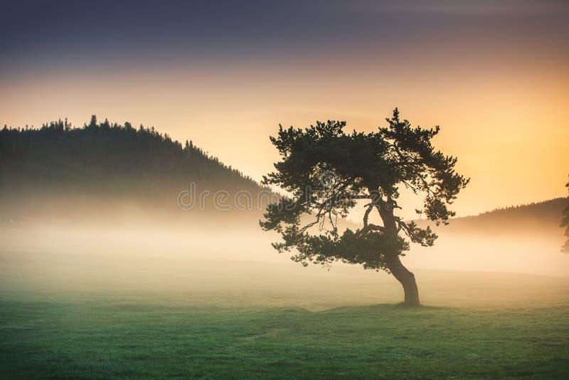Nevelige ochtend met eenzame boom op het gebied royalty-vrije stock afbeeldingen