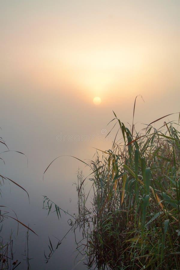 Nevelige ochtend op het meer De zon in de mist Zeer vroege ochtend royalty-vrije stock fotografie