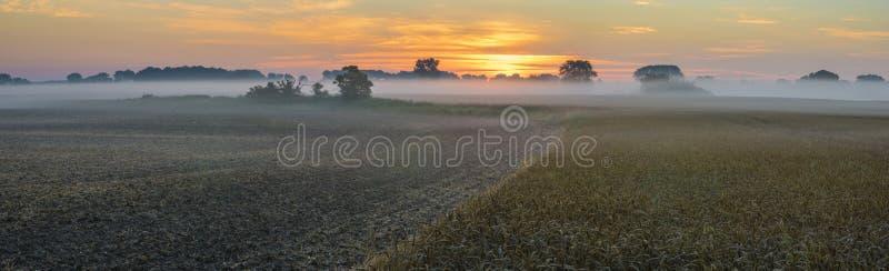 nevelige ochtend over het gebied van rijpe tarwe De recente zomer op de gebieden in Duitsland in de ochtend stock foto