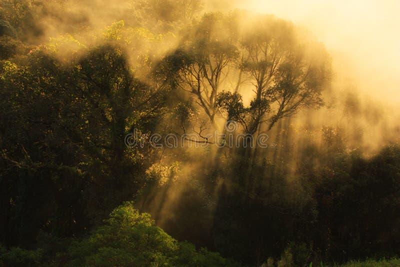nevelige ochtendzonsopgang in berg in Noord-Thailand royalty-vrije stock fotografie