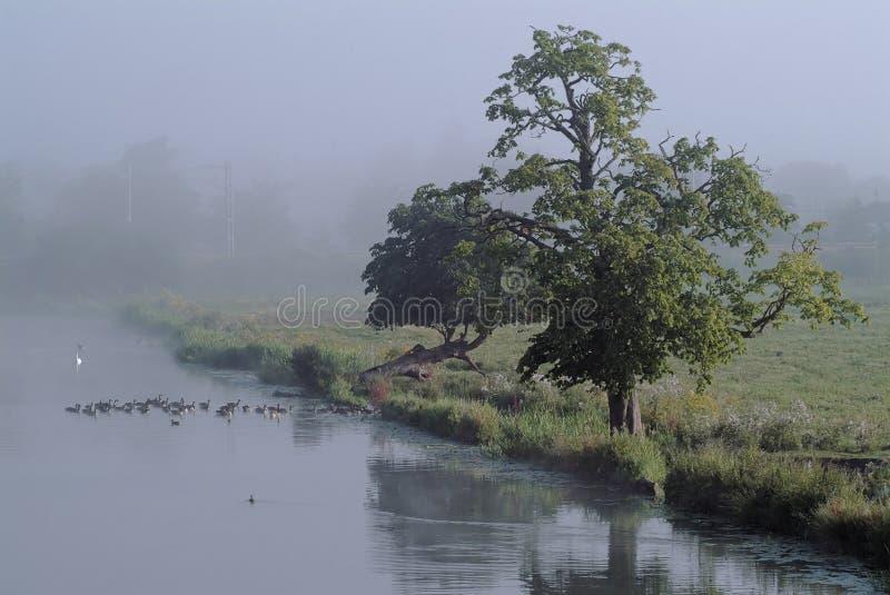 Nevelige rivieroeverochtend royalty-vrije stock fotografie