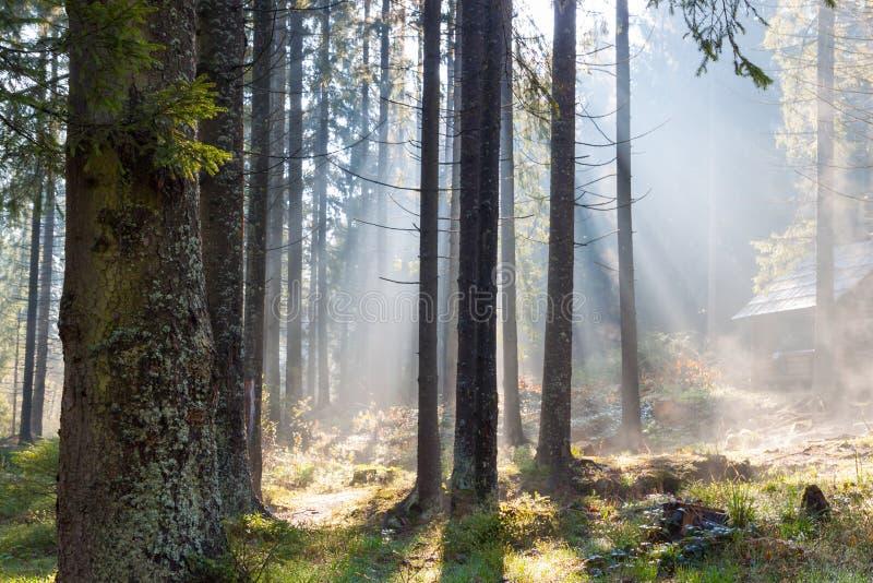 Nevelige zonnige ochtend in bos royalty-vrije stock afbeeldingen