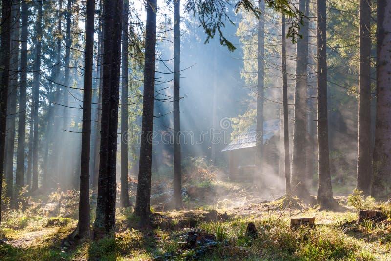 Nevelige zonnige ochtend in bos stock fotografie