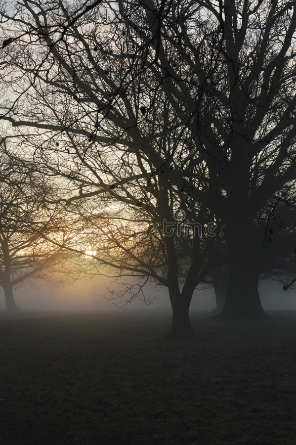 Nevelige zonsopgang in landelijk West-Sussex, Engeland royalty-vrije stock afbeelding