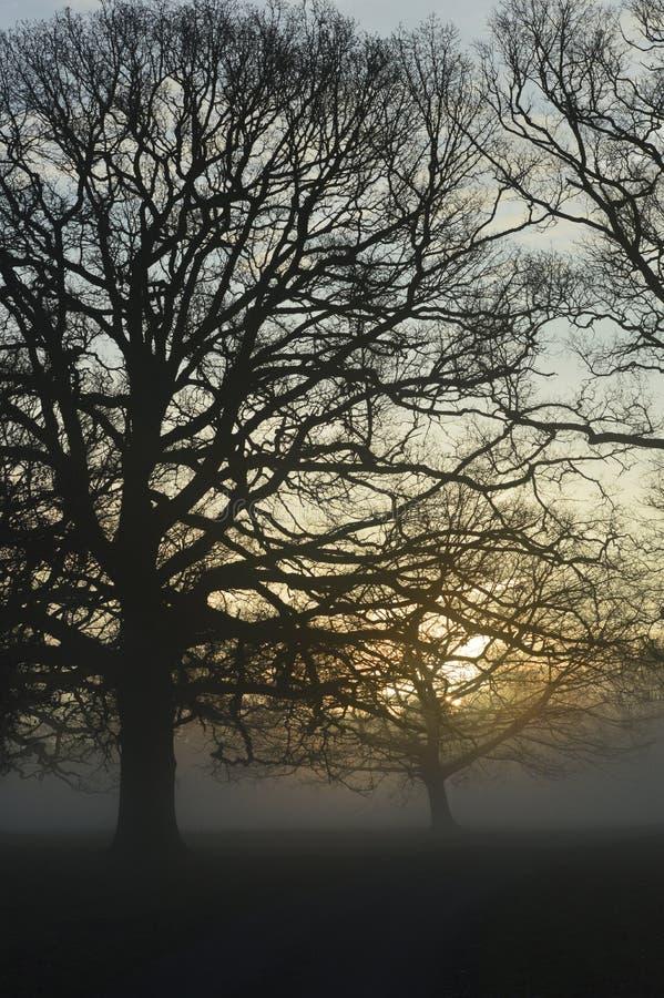 Nevelige zonsopgang in landelijk West-Sussex, Engeland stock foto