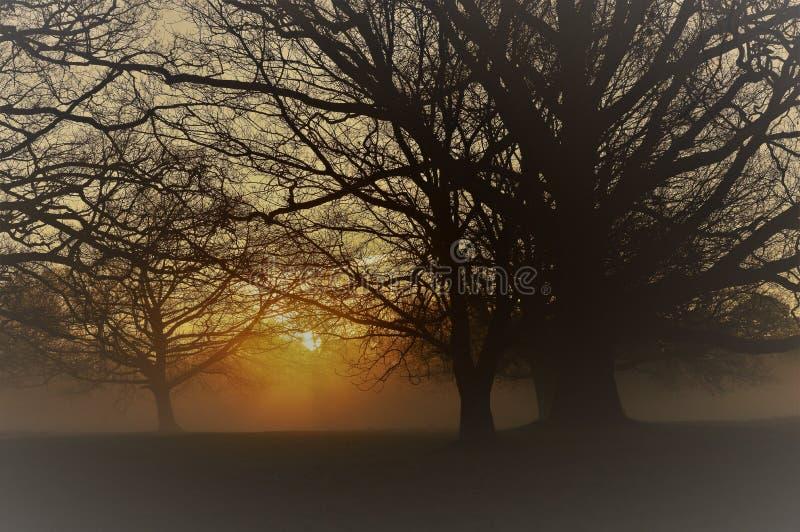 Nevelige zonsopgang in landelijk West-Sussex, Engeland stock afbeelding