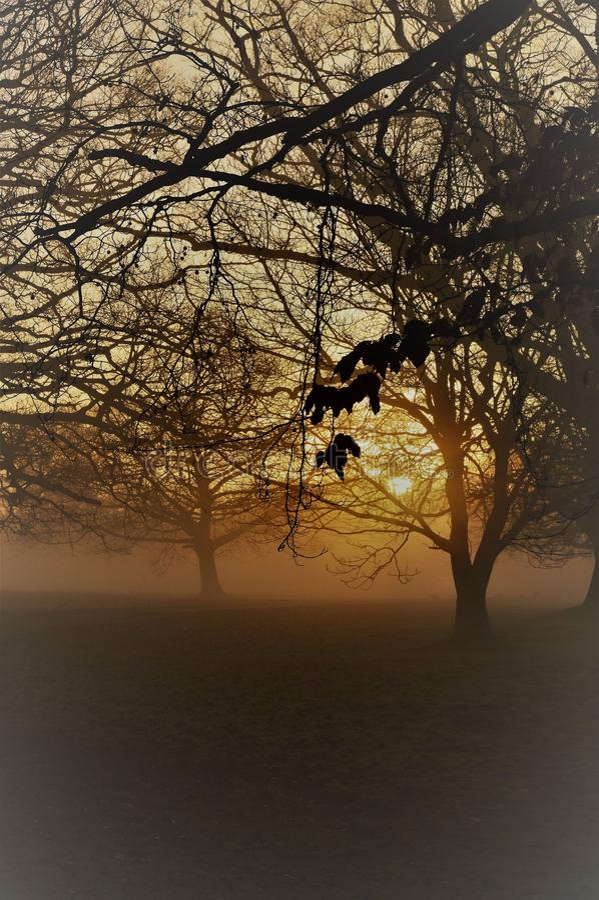 Nevelige zonsopgang in landelijk West-Sussex, Engeland stock fotografie