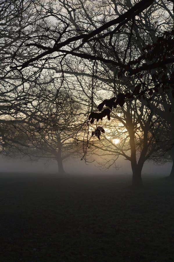 Nevelige zonsopgang in landelijk West-Sussex, Engeland royalty-vrije stock fotografie
