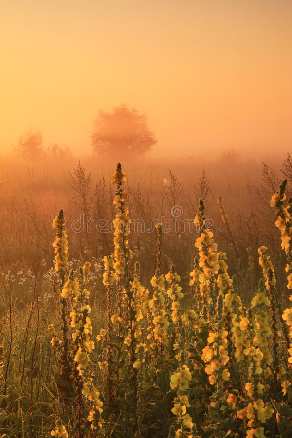 Nevelige zonsopgang op het gebied royalty-vrije stock afbeelding