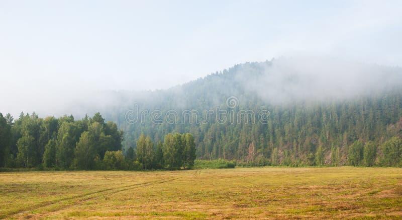 Nevelochtend in het bos stock foto