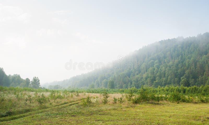 Nevelochtend in het bos royalty-vrije stock afbeelding