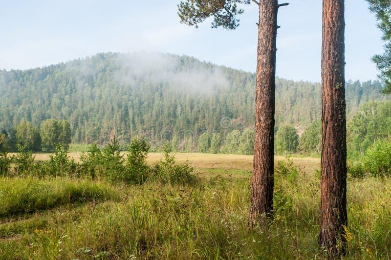 Nevelochtend in het bos royalty-vrije stock afbeeldingen