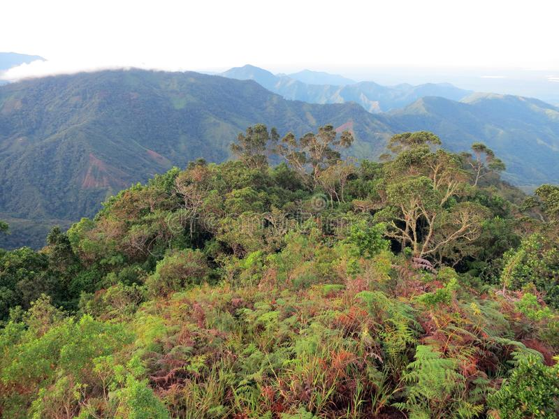 Nevelwoud / cloud forest; Santa Marta Mountains, Colombia. Nevelwoud / cloud forest; Santa Marta Mountains, Sierra Nevada, Colombia royalty free stock photos