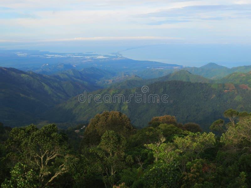 Nevelwoud / cloud forest; Santa Marta Mountains, Sierra Nevada,. Nevelwoud met uizticht over Santa Marta / cloud forest with view over Santa Marta; Santa Marta royalty free stock photo