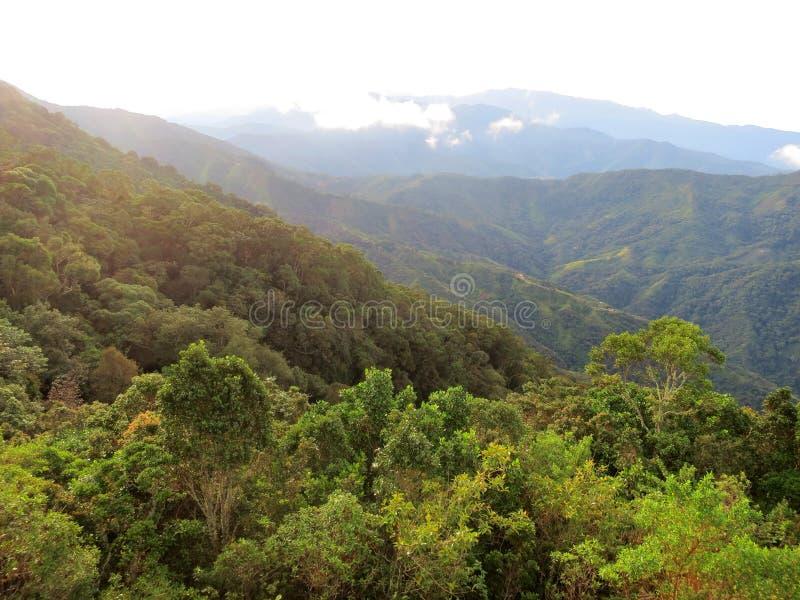 Nevelwoud/molnskog; Santa Marta Mountains Sierra Nevada, royaltyfria bilder