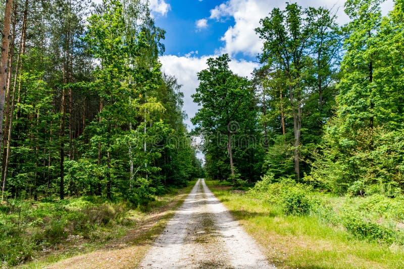 Neverending lasowa ścieżka obraz stock