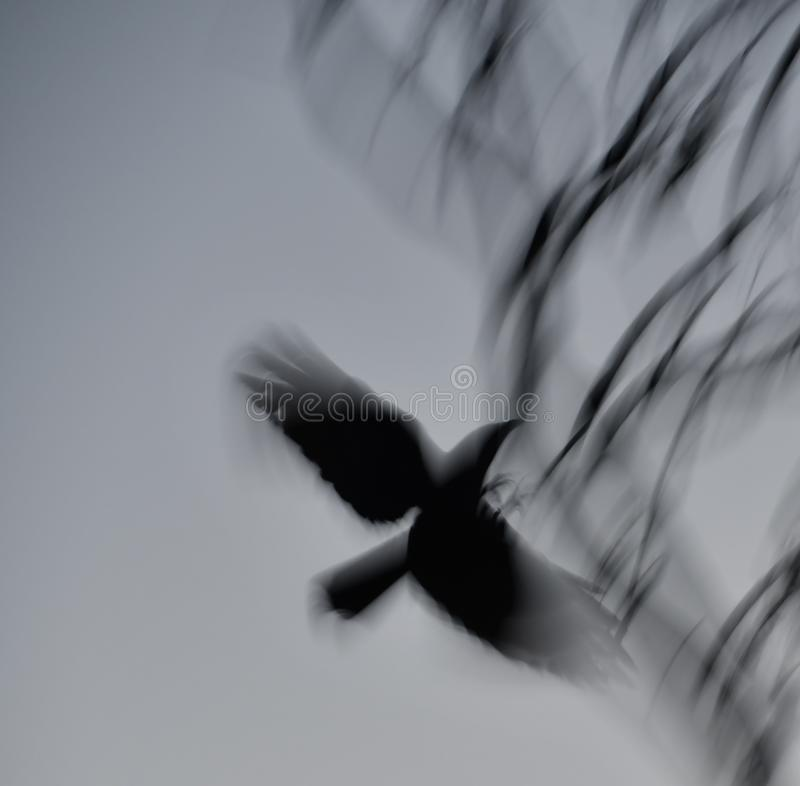 nevermore στοκ φωτογραφίες