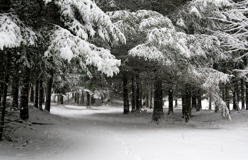 Nevicando nel legno immagine stock libera da diritti