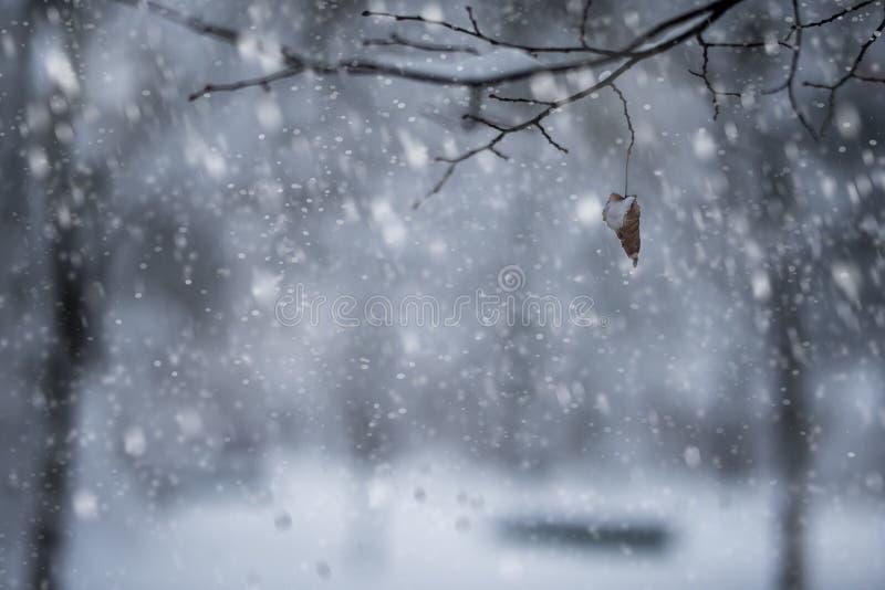 nevicare fotografie stock
