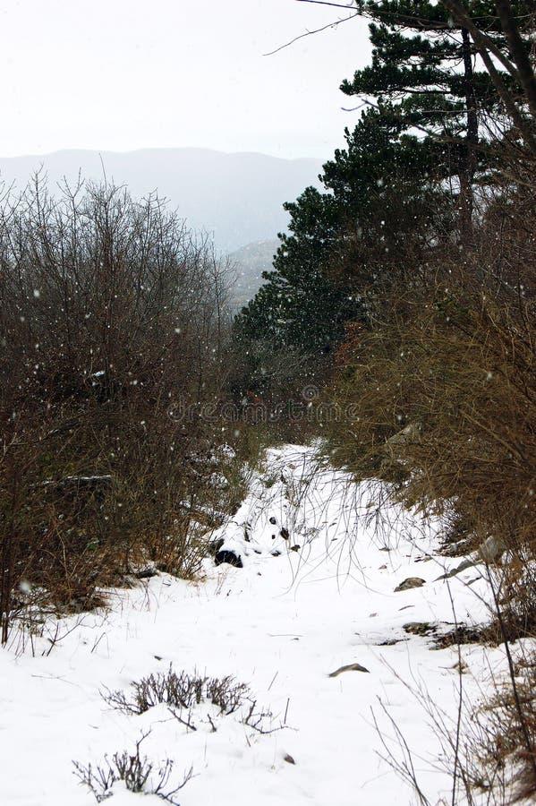 nevicare immagine stock