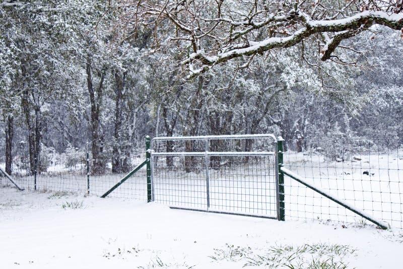 Nevichi su un cancello con gli alberi nel Texas immagini stock libere da diritti