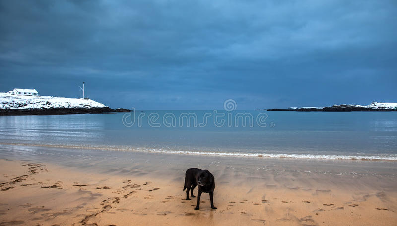 Nevichi sulla spiaggia della baia di Trearddur in isola dell'inverno di Anglesey Wal del nord immagini stock