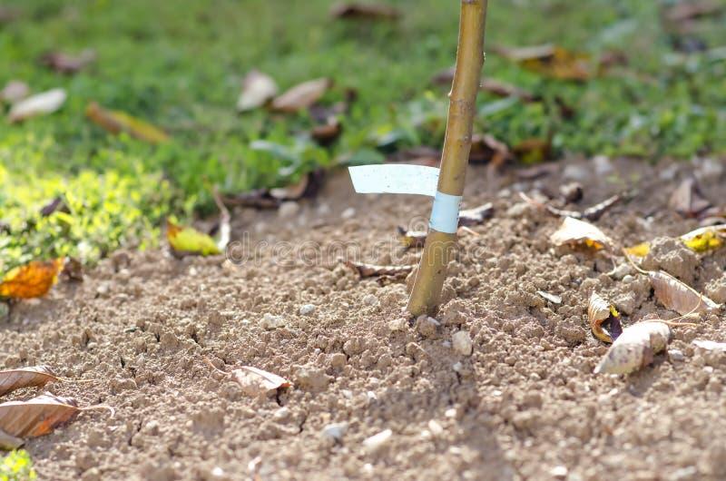The new autumn fruit tree seedlings. royalty free stock photos